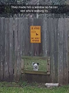 Online Pinterest Pin Board Blog: Little Guy Peeps Out Little Window In Fence Line