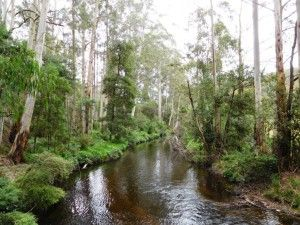 Upper Yarra Track: Winter Route: Caringal Scout Camp: Tyers Junction, Gippsland, Victoria, Australia:  Ultra Light Hiking Backpacking