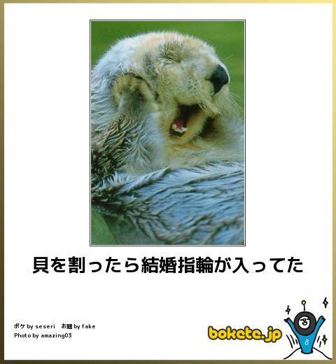 【癒しと笑いを生み出す】動物でボケてみた16選 | CuRAZY