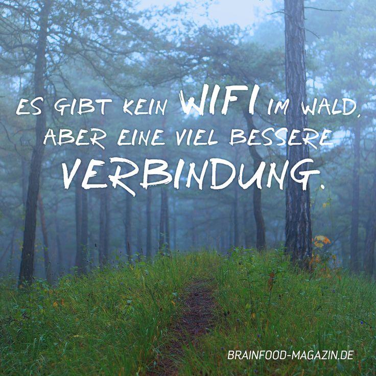 Es gibt kein WIFI im Wald, aber eine viel bessere Verbindung. #sprüche #zitate #deutsch #motivation #natur #brainfood