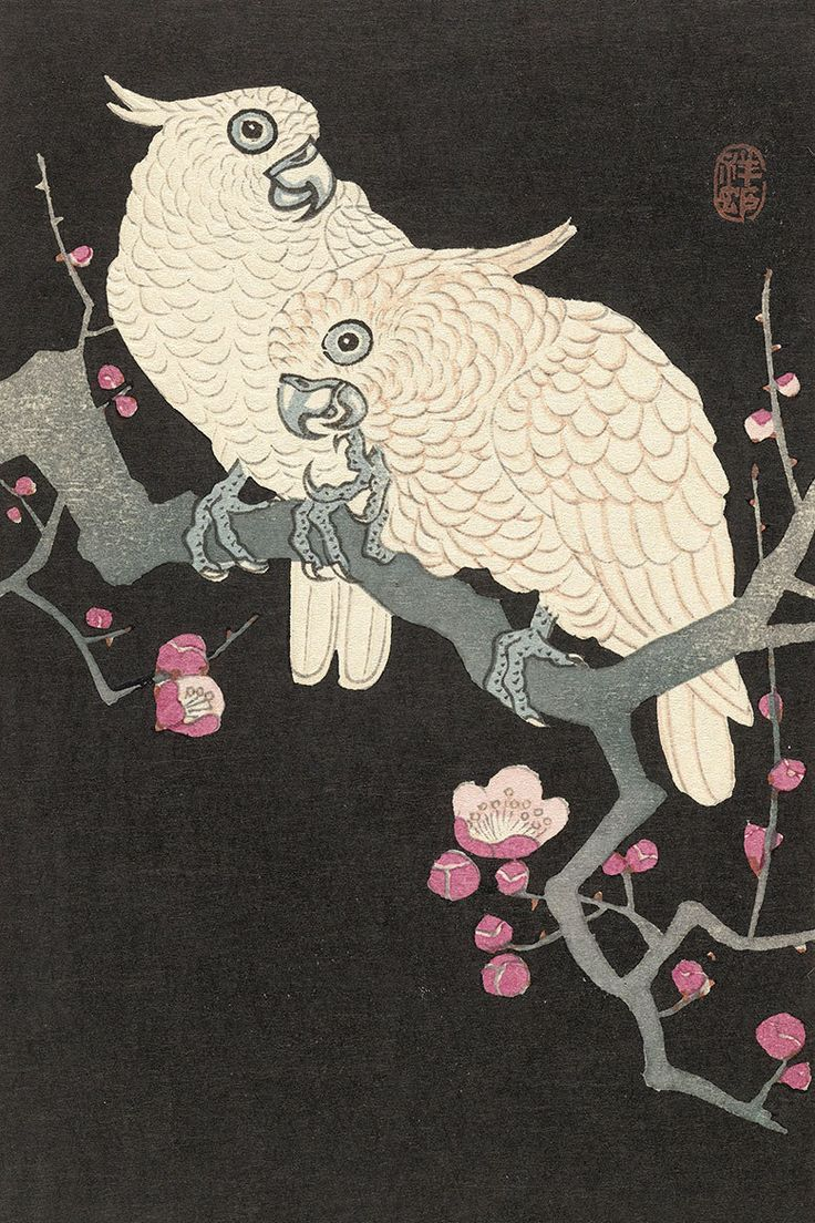Two Cockatoos on a Branch with Plum Blossom by Watanabe Shozaburo