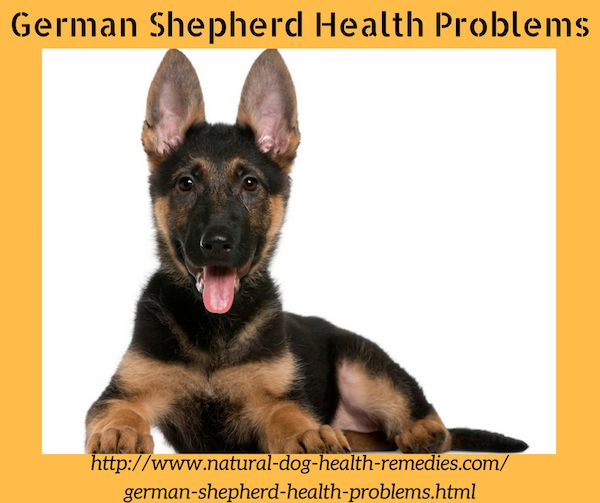 Find out some common health problems that German Shepherd dogs have.
