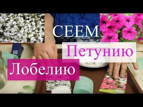 """Сеем бархатцы в """"улитку"""". Просто и эффективно. (07.03.2016 г.). - YouTube"""