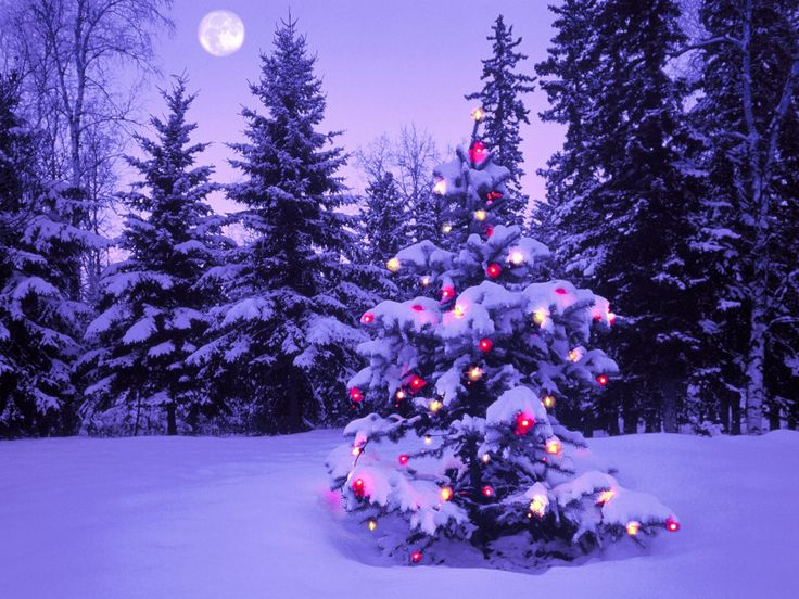 Exellent Snow Desktop Backgrounds Wallpapers Chrsitmas Tree Out In The A To Ideas