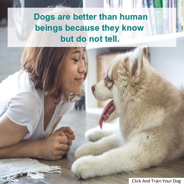 Dog Aggression Training Sarasota Dog People Dogs Your Dog
