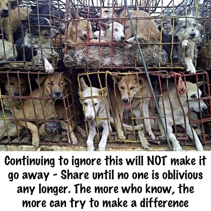 PLEASE REPIN! Turning a blind eye will not make the suffering go away. It prolongs it. #cancelYulinDogMeatFestival #dogsarenotfood pic.twitter.com/xQtk8Foncs