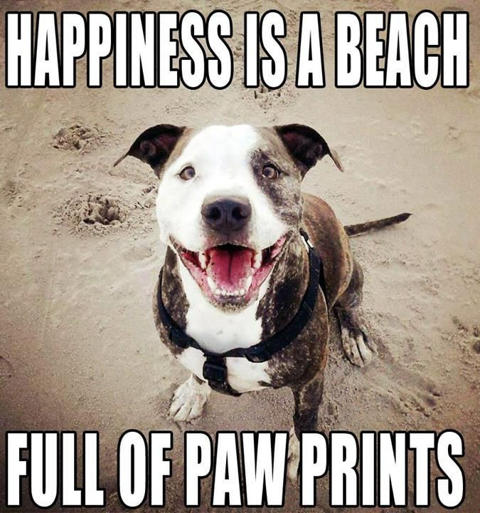 Happiness is a beach full of pawprints!