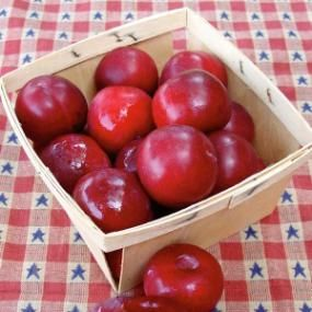 Bubblegum Plum® | Easy-to-grow fruit that smells and tastes like bubblegum! This heavy-producing variety yields crops of medium to large plums with reddish bronze skin and juicy yellow flesh that's as sweet as candy. Trees have lovely, erect, vase shapes. Very cold-hardy — tolerant of temperatures as low as -50ºF.