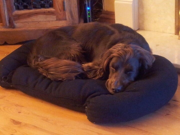 Homemade dog bed for my furry friends pinterest for Homemade pet beds