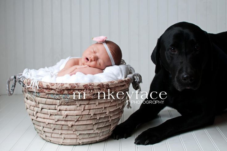 newborn and dog photography.   Baby Charlotte and her dog