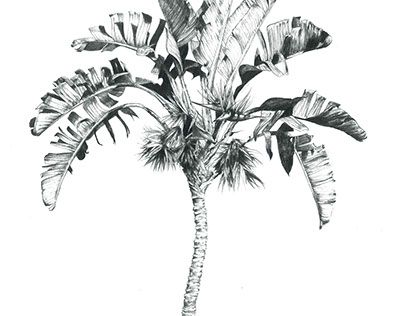 """Palm tree, strilitzia tree illustration Check out new work on my @Behance portfolio: """"Tropical Trees"""" http://be.net/gallery/58207771/Tropical-Trees"""