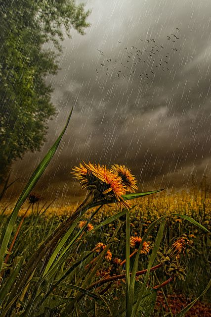 "studioview: "" Who'll stop the rain by Knight Zeisy on Flickr. """