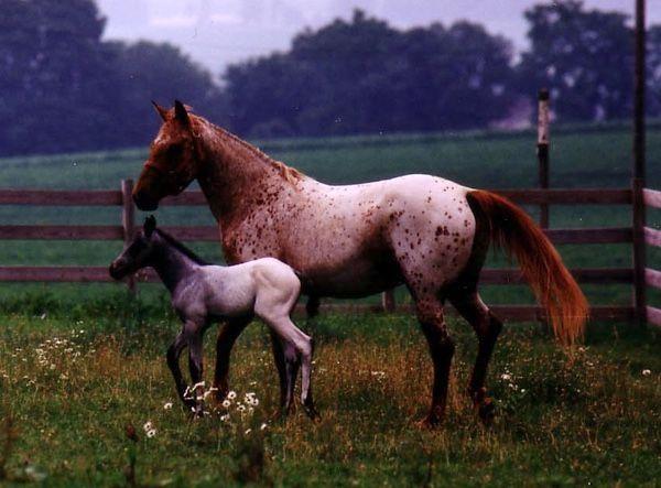 Sun Shimanita and foal  April 26,1986-May 5, 2016