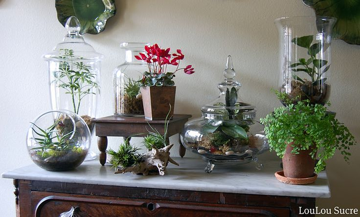 Terrariums... my new obsession. Easy, little up keep, and very pretty....