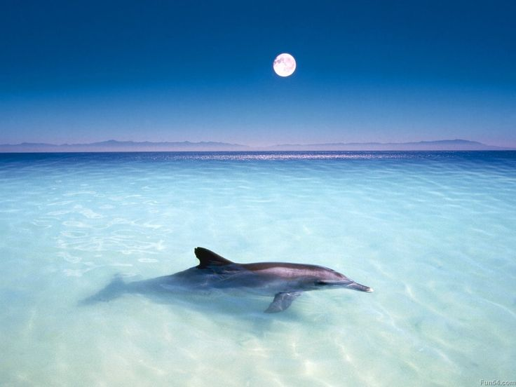 images of the sky in black and white Beautiful dolphin