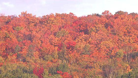 アルゴンキン州立公園の景色2