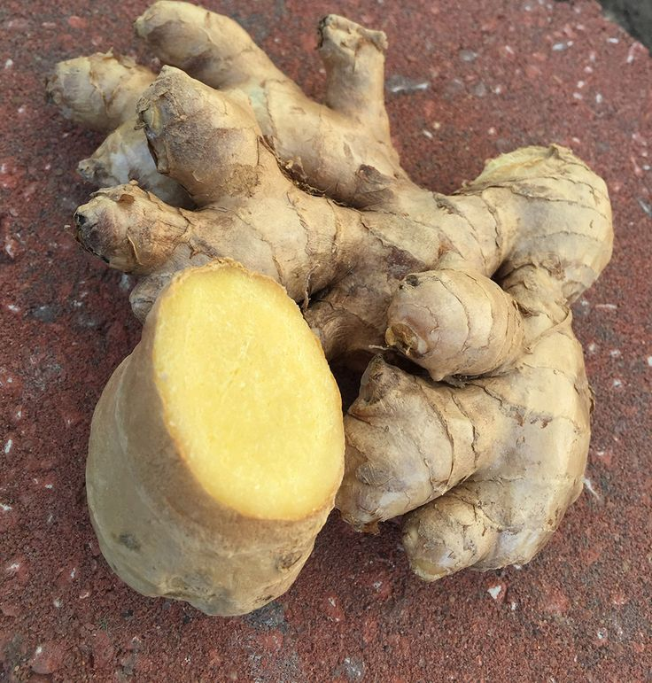 Ginger Kombucha - The Anti-Inflammatory Drink - Cultured Food Life