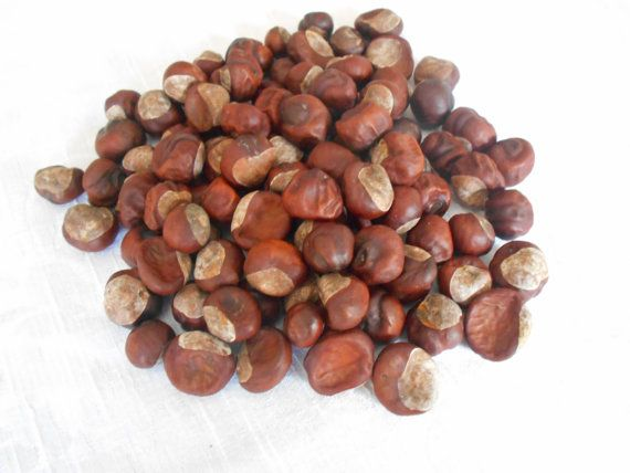 Real Horse Chestnuts Natural Buckeyes Craft by ALoopandAHook