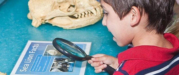 Santa Monica Pier Aquarium Kid with Magnifying Glass