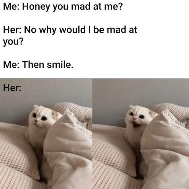 Pin By Khari Lester On Funny Memes Cat Memes Mad Meme Funny Memes