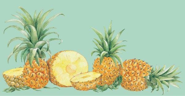 Piña. Acuarela para empaque de frutas congeladas