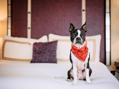 The Ultimate Dog Friendly Hotel In Downtown San Diego Hotele