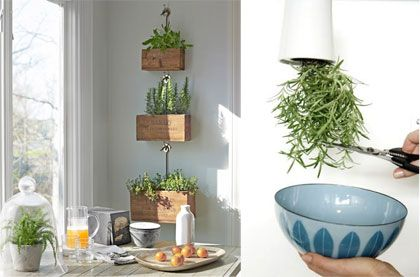 Hanging Herbs In Your Kitchen Cooking Kitchen Herbs