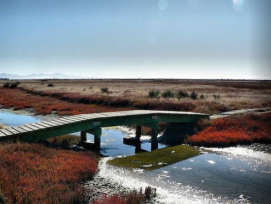 Salt Marsh, Blenheim, New Zealand.
