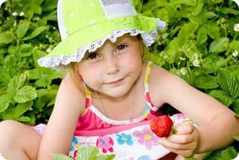 younghearts  |  Picking strawberries at Polkadraai, Stellenbosch