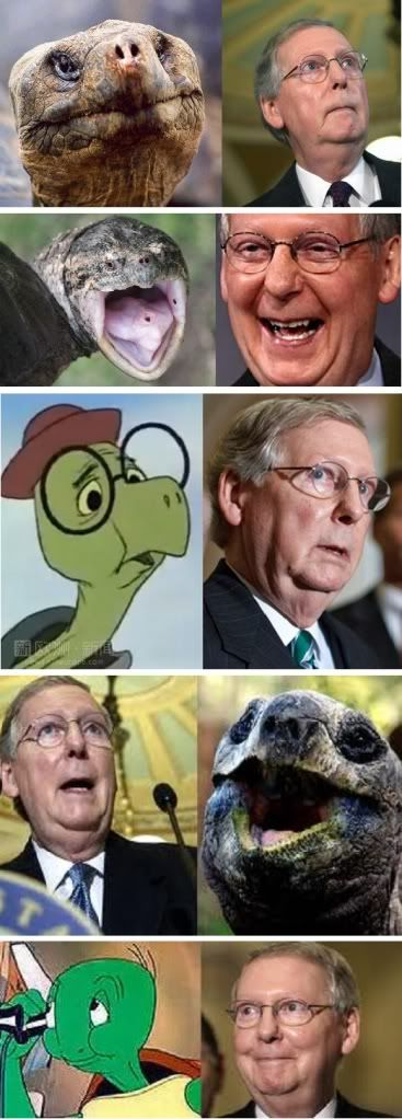 Best 25+ Mitch mcconnell ideas on Pinterest | Funny cover ...
