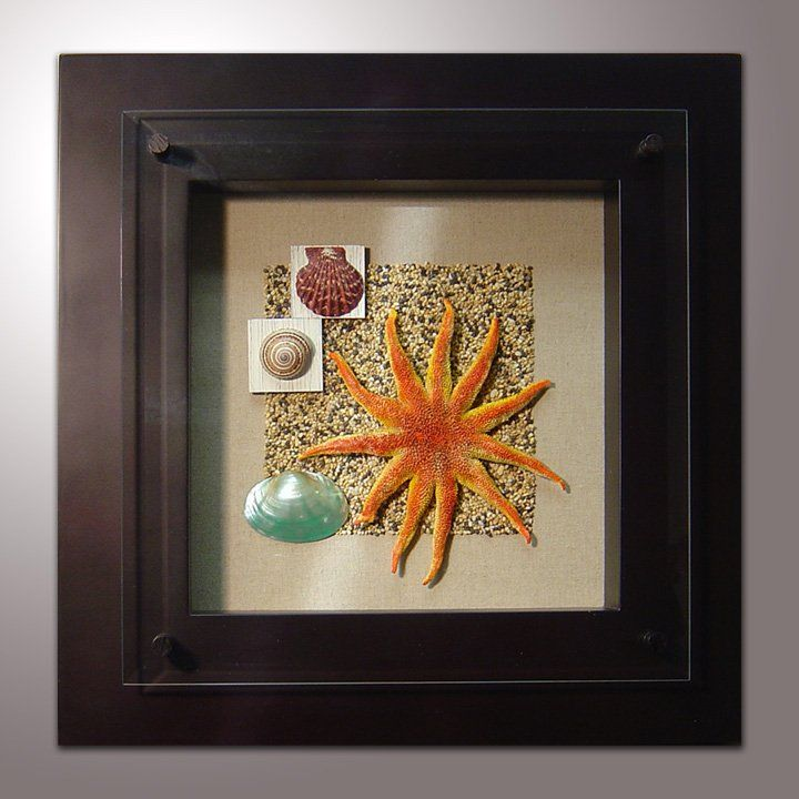 Seashell Shadow Boxes Shadow Box And Ocean On Pinterest