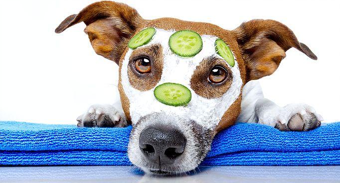 Clean Beauty Pet Resort Dog Grooming Best Friends Pets