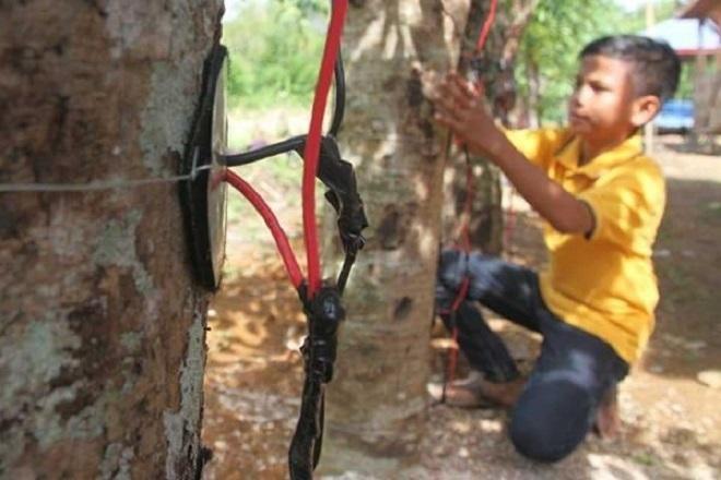 Covesia.com - Badan Pengkajian dan Penerapan Teknologi (BPPT) menyatakan energi dari pohon kedondong belum memadai untuk memenuhi kebutuhan listrik wajar di...