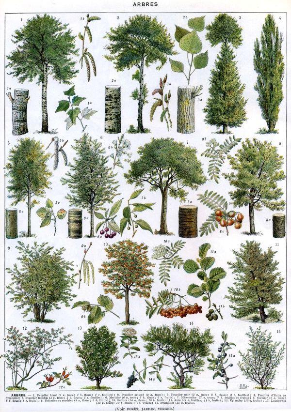 French tree illustration (scheduled via http://www.tailwindapp.com?utm_source=pinterest&utm_medium=twpin&utm_content=post1339919&utm_campaign=scheduler_attribution)
