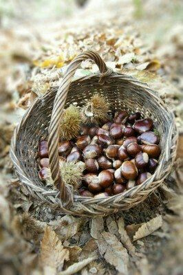 Chestnuts in a basket for roasting over fire pit
