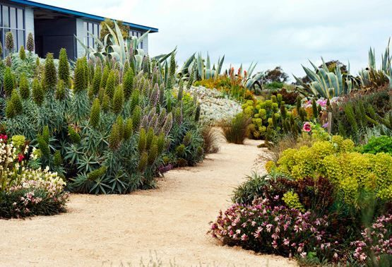 17 best images about native gardens on pinterest
