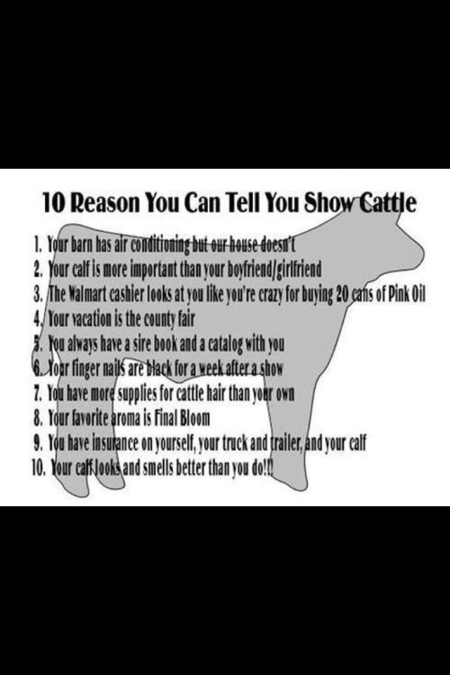 10 reasons to show cattle.