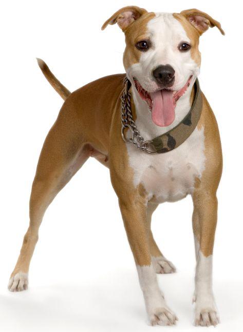 Op GEKop Honden vind je alle relevante adressen voor hondenliefhebbers zoals adressen van dierenartsen, dierenwinkels, trimsalons, kennels en nog veel meer https://www.gekophonden.be/honden-adressen/