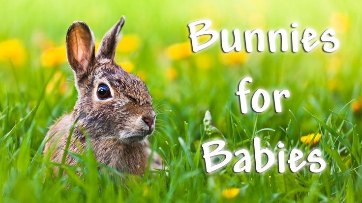 ♥ 1 Hour of Cute Bunnies ♥ Baby music video with bunnies by Rainbow Kids TV