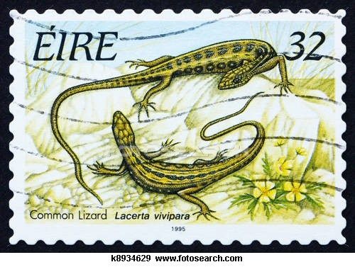 Postage stamp Ireland 1995 Common Lizard, Reptile
