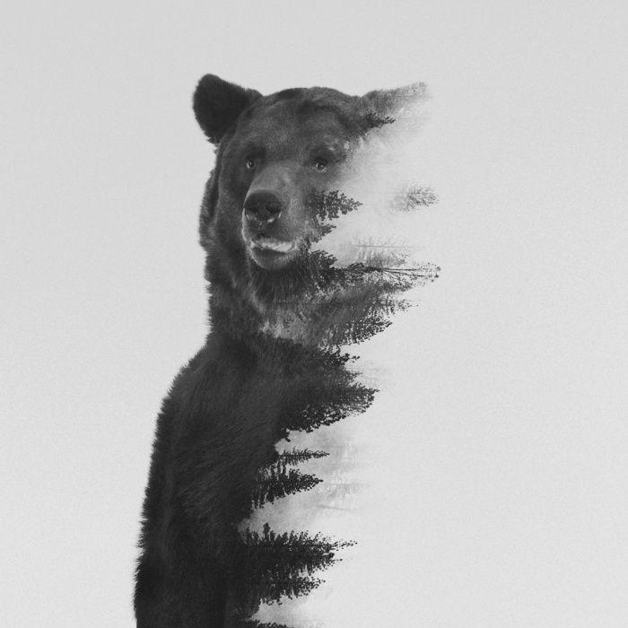 Observing Bear (black & white version) Canvas Print