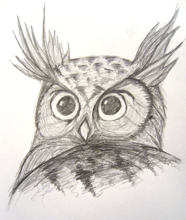 Horned Owl drawing / Gufo Reale, disegno - Sketch/Schizzo by Meteorman05 on deviantART