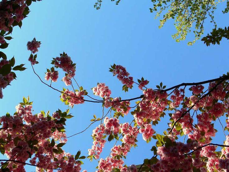 Veranstaltungen und Wochenendtipps für Wochenende #Hamburg: Partys, Märkten, Minifestivals,Kirschblütenfest