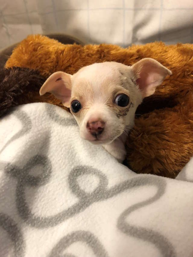 Tiny Stray Puppy Falls From The Sky And Somehow Survives