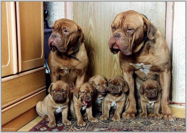 Family photo - Pixdaus