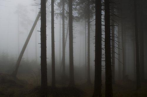 Mists in Karkonosze, Poland