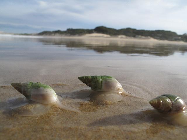 Kleinemonde beach