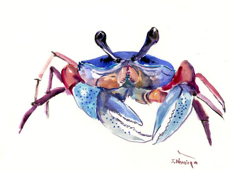 Blue Crab, 12 X 9 in, original watercolor sea world animal art, crab painting, seafood, kitchen art, restaurant art, sea food, crab animals by ORIGINALONLY on Etsy