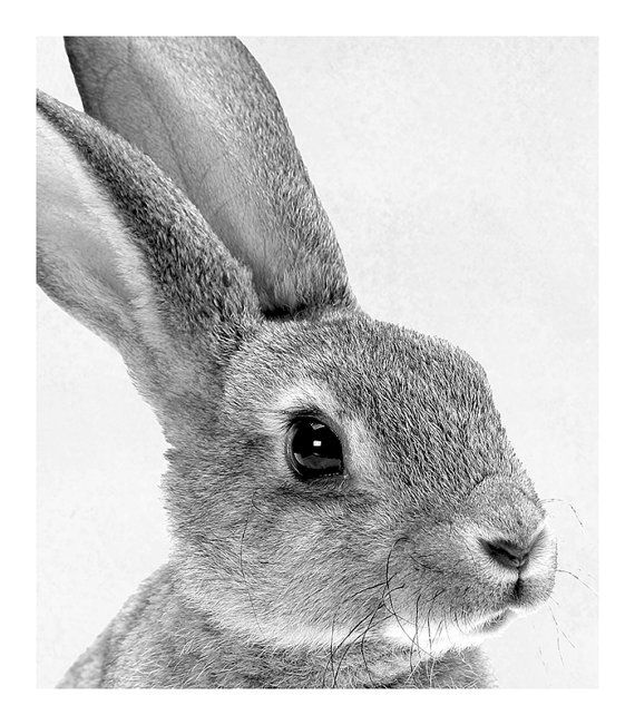 Baby Animal Nursery Art Modern Nursery Prints Cute Nursery Decor Rabbit Tail Print Animal Portrait Bunny Print Animal Photography Baby Room – boerle
