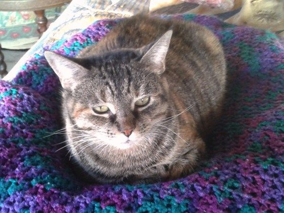 Help Edith Ann Fight Feline Mammary Cancer | Pet Expenses - YouCaring